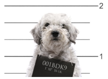 2005: A dark day for our company as Fly Dog is arrested, following what is now only occasionally referred to as 'the rubber chicken incident'.